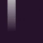 062 BLACK TULIP